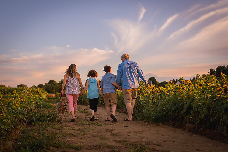 family photographer in rochester ny captures family walking through the sunflowers with their dog