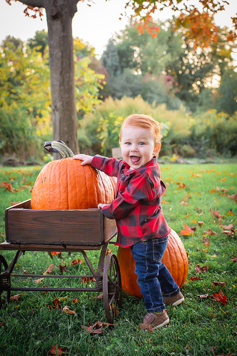 baby photographer in rochester ny captures one year old boy in buffalo check shirt with a wheelbarrow of pumpkins