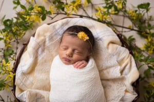 newborn girl in forsythia captured by rochester, ny newborn photographer